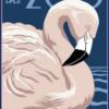 Zoo plakat - flamingo -
